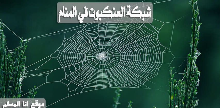 حلم العنكبوت