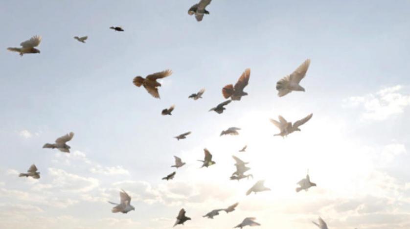 صورة حلم جميع انواع الطيور