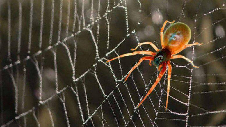 صورة حلم العنكبوت