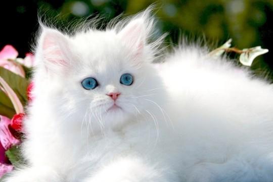 صورة تفسير حلم القطط