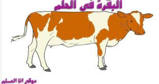 البقرة في الحلم