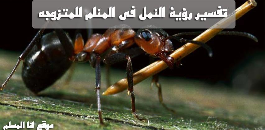 النمل فى المنام