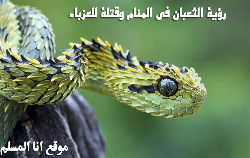 رؤية الثعبان في المنام وقتله انا المسلم