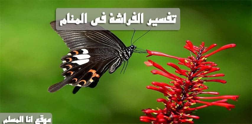 صورة تفسير الفراشة في المنام