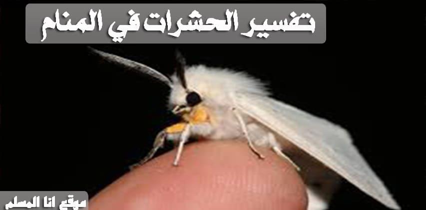 تفسير الحشرات في المنام