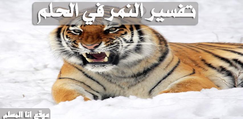 صورة تفسير النمر في الحلم