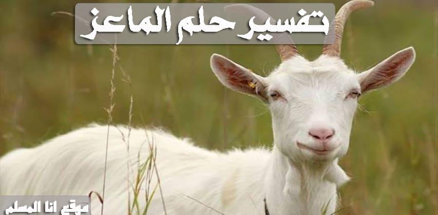 صورة تفسير حلم الماعز