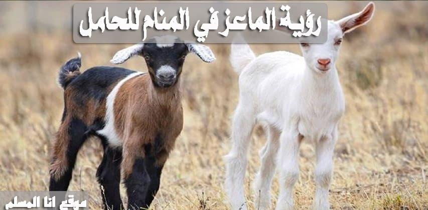 تفسير حلم الماعز