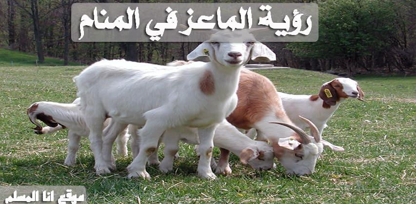 تفسير حلم الماعز انا المسلم