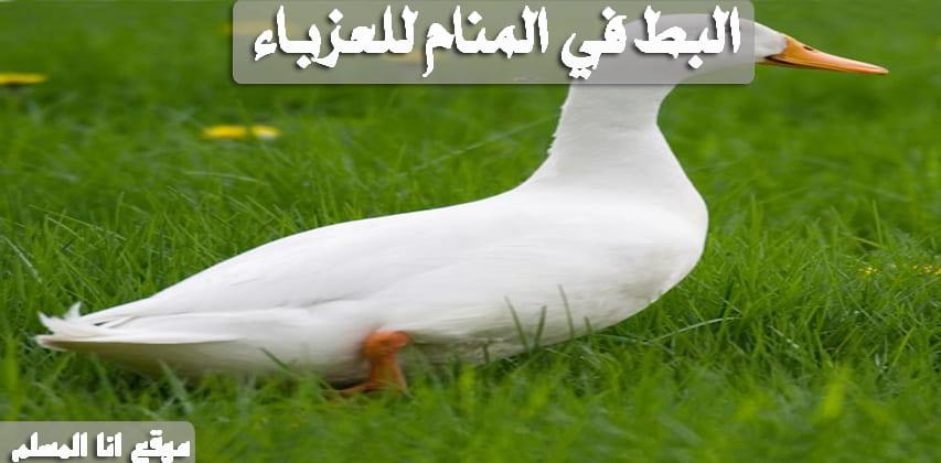 تفسير حلم البط انا المسلم