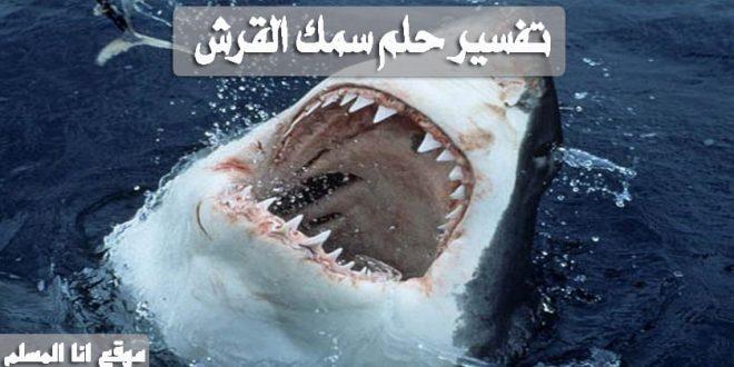 تفسير حلم سمك القرش