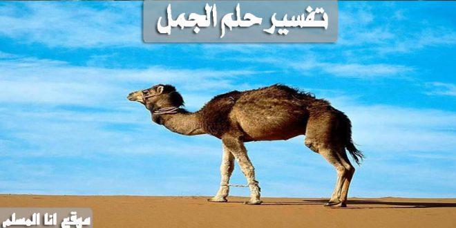 تفسير حلم الجمل انا المسلم