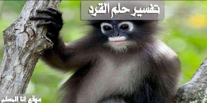 تفسير حلم القرد