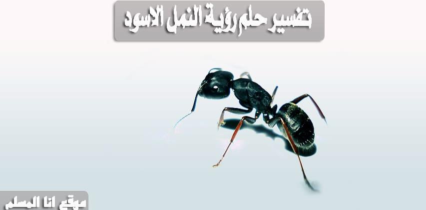 تفسير حلم رؤية النمل الاسود