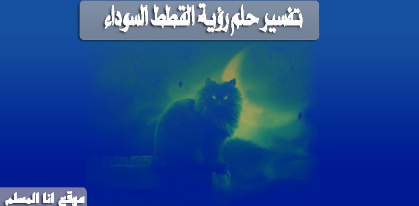 تفسير حلم رؤية القطط السوداء