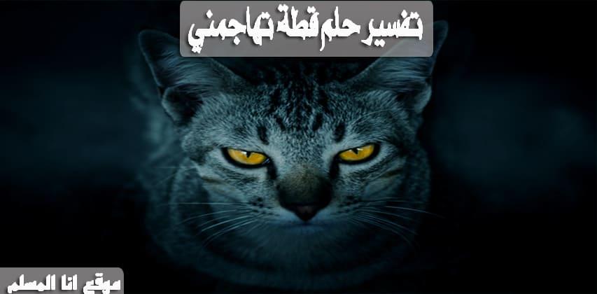 صورة تفسير حلم قطة تهاجمني