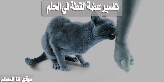 تفسير عضة القطة في الحلم