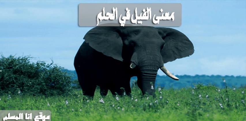 تفسير الفيل في المنام