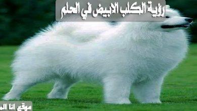 رؤية الكلب الابيض في الحلم