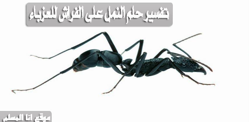 تفسير حلم النمل في الفراش