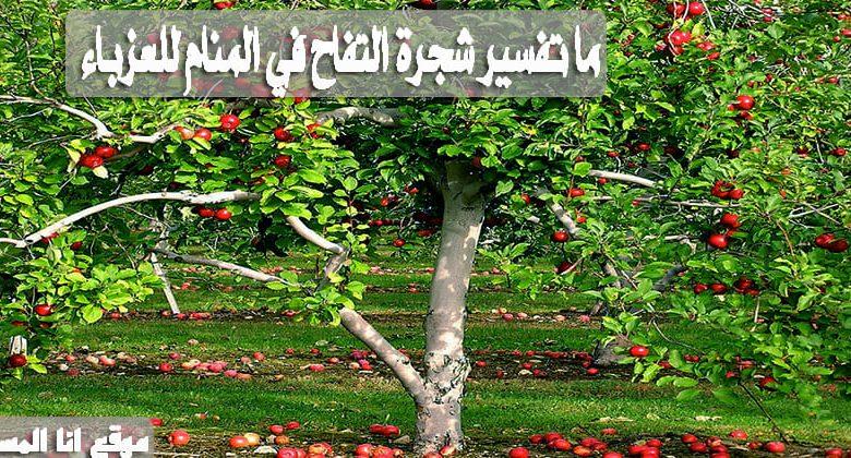 ما تفسير شجرة التفاح في المنام للعزباء